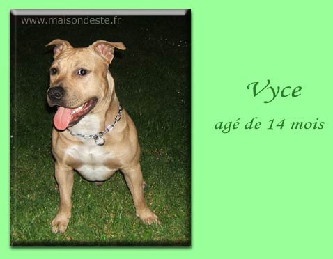 vyce1