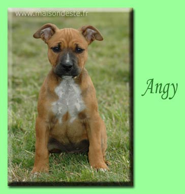 angy
